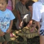 Sheldon- African Spur Tortoise